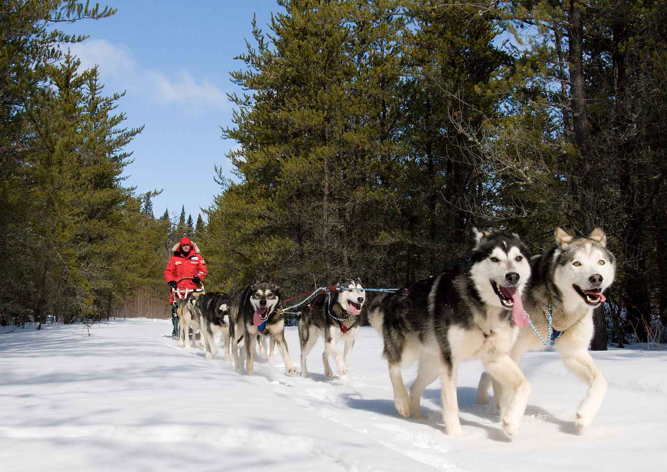 Dogs pulling a sled at Anglin Lake in Saskatchewan